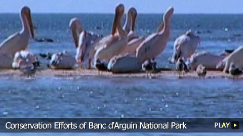 Conservation Efforts of Banc d'Arguin National Park