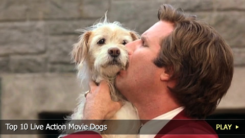 Top 10 Live Action Movie Dogs