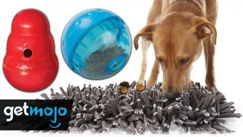 Top 5 Best Toys to Mentally Stimulate Your Dog