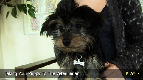 Taking Your Puppy To The Veterinarian