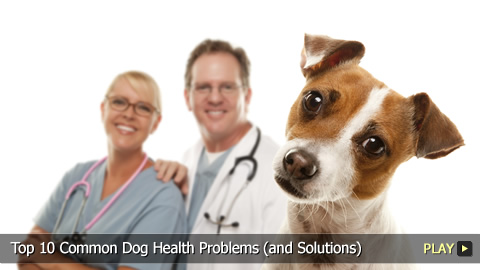 Top 10 Common Dog Health Problems (and Solutions)