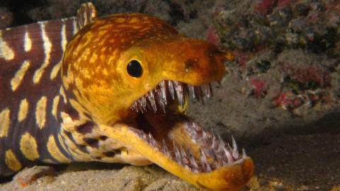 Top 10 Terrifyingly Deadly Sea Creatures