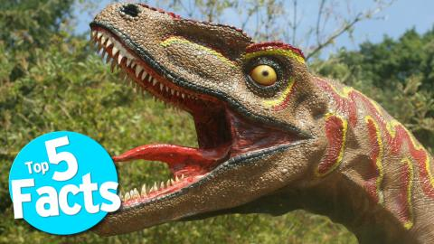 Top 5 Disgusting Dinosaur Facts