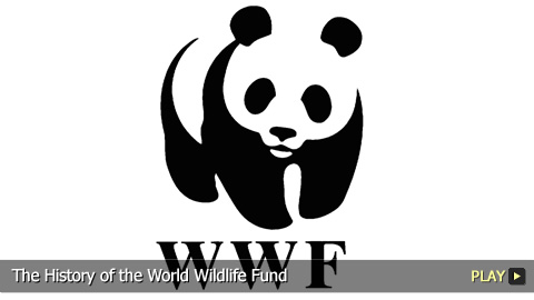 The History of the World Wildlife Fund
