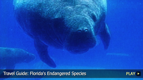 Florida's Endangered Species