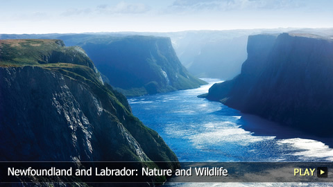 Newfoundland and Labrador: Nature and Wildlife