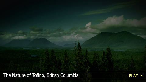 The Nature of Tofino, British Columbia