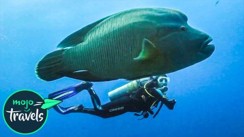 Top 10 Most Awesome Scuba Diving Spots Ever
