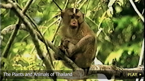 The Plants and Animals of Thailand