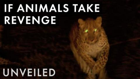 What If Animals Hunted Humans?