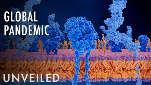 What If We Cured the Common Cold? | Unveiled