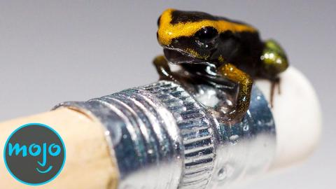 Top 10 Smallest Animals That Could Kill You