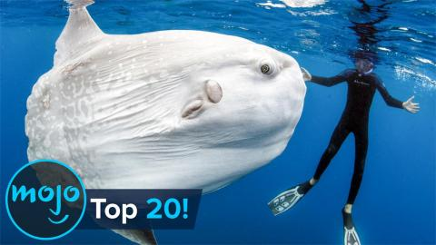 Top 10 Abnormally Large Animals That Really Exist