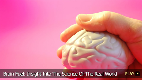 Brain Exercises: Insight Into The Science Of The Real World