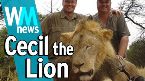 10 Cecil the Lion and Trophy Hunting Facts - WMNews Ep. 39