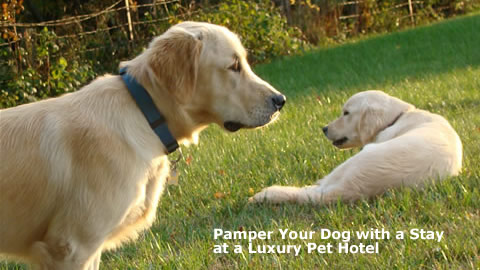 Pamper your Dog or Cat with a Stay at a Luxury Pet Hotel