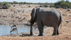 Travel Guide: Namibia - Wildlife