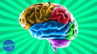 Top 5 Facts about the Brain - List & Learn
