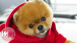 Top 10 Dog Breeds that Have the Cutest Puppies