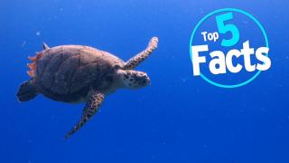 Top 5 Endangered Animal Facts