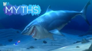 Top 5 Myths About Sharks
