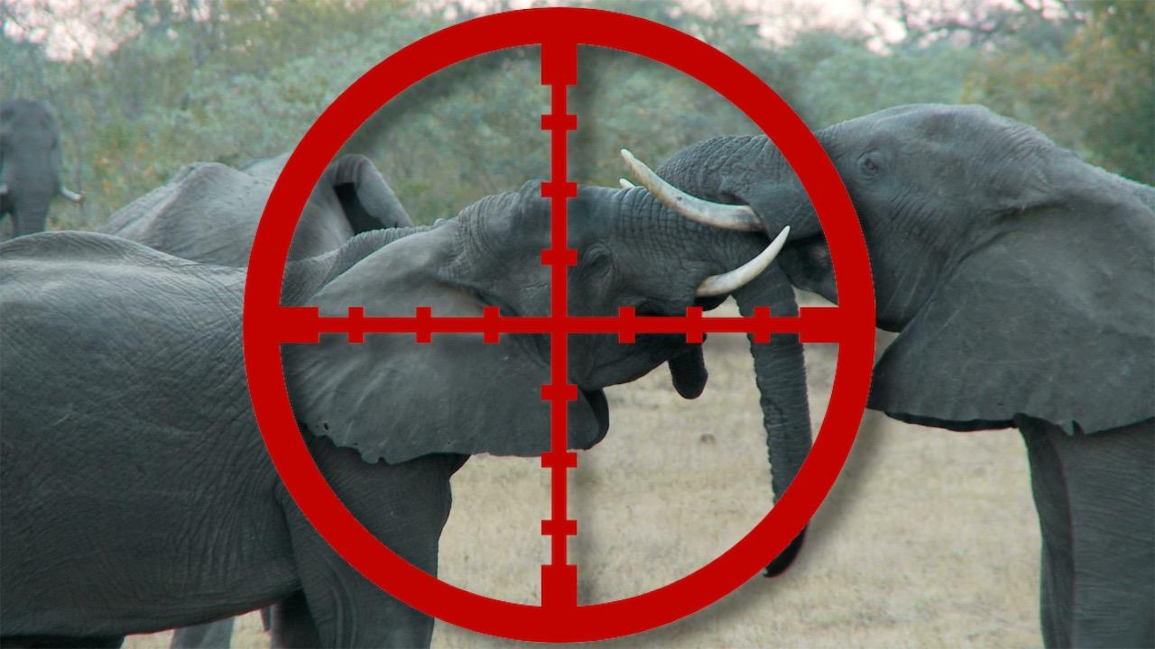 Top 10 Controversial or Illegal Animal Hunts