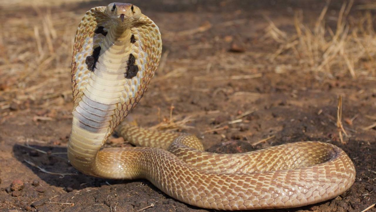 Top 10 Most Dangerous Snakes Around The World