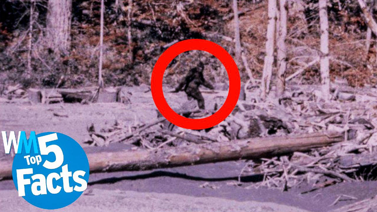 Top 5 Facts About Catching Bigfoot CONFIRMED